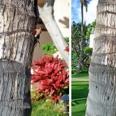 After we came back I stood in line to save our spot for the resort's buffet and saw these two lizards doin' it on a tree. Awesome!